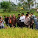 CSIS: Petani Makin Puas dengan Pemerintah