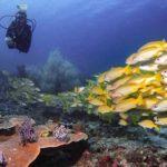 Diving di Labuan Bajo Bikin 'Mabok Cinta'