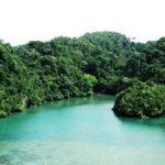 Upaya Penyelamatan Flora di Pulau Sempu