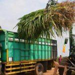 RNI Kembangkan Biofuel Rumput Gajah