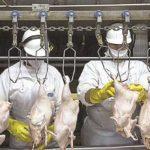 Digugat Brasil, Pertahankan Syarat Halal