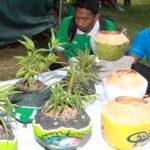 Kreatif: Batok Kelapa Jadi Pot Bunga