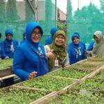 40.000 Bibit Cabai dari Balitbangtan Jatim