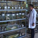 Lab Kesehatan Ikan Kelas Dunia