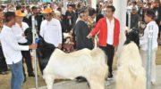 Jokowi Harap Ada Korporasi Rakyat