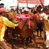 Lomba Kerapan Sapi Piala Presiden di Bangkalan