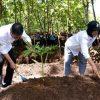 Pulihkan Hulu DAS dengan Agroforestri